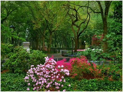 What is a Shakespeare Garden? -