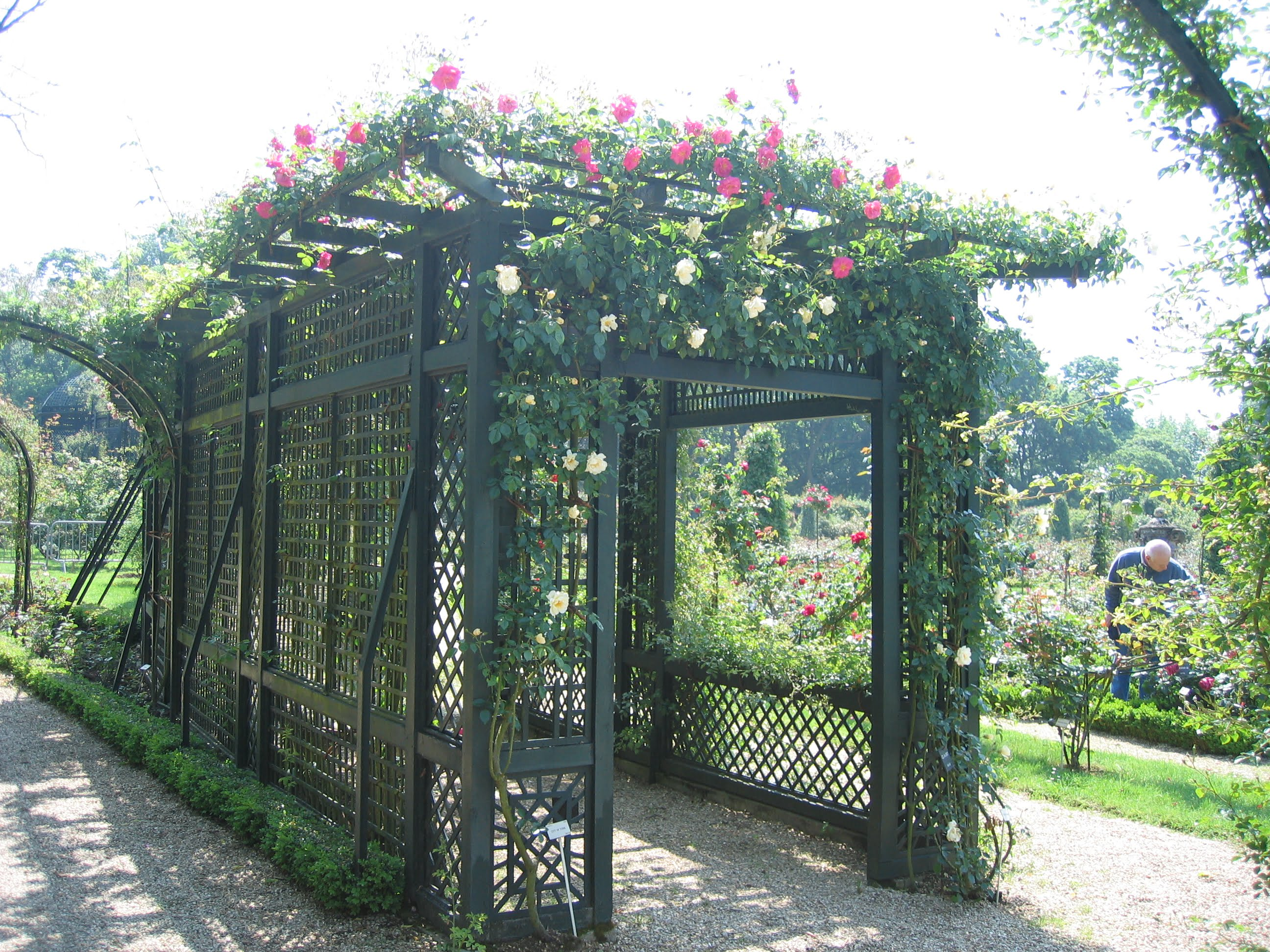 Trellises and climbing plants vines - Pergola climbing plants under natures roof ...