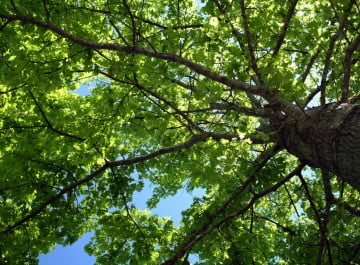 High Tech Landscapes Tree Service NJ