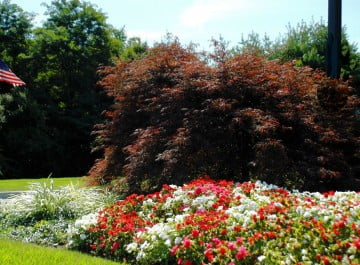 Commercial Lawn, Tree & Shrub Care Somerset County NJ