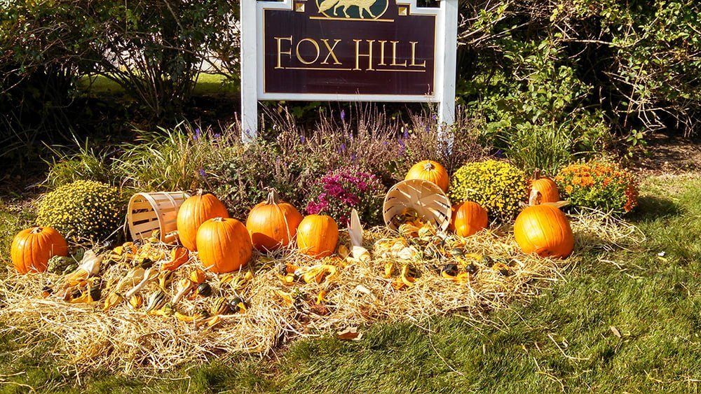 Fall Halloween Landscaping Ideas