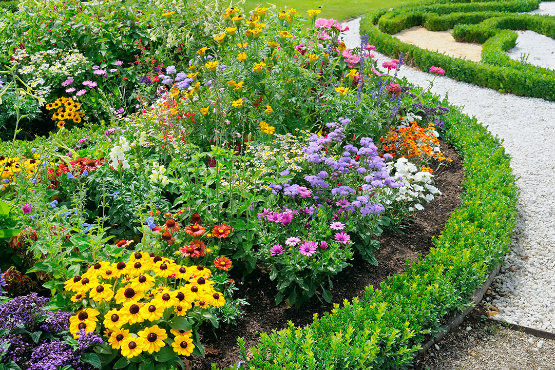 Perennials Vs Annuals What S The Difference