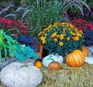 Fall Landscaping Ideas to Find That Fall Feeling