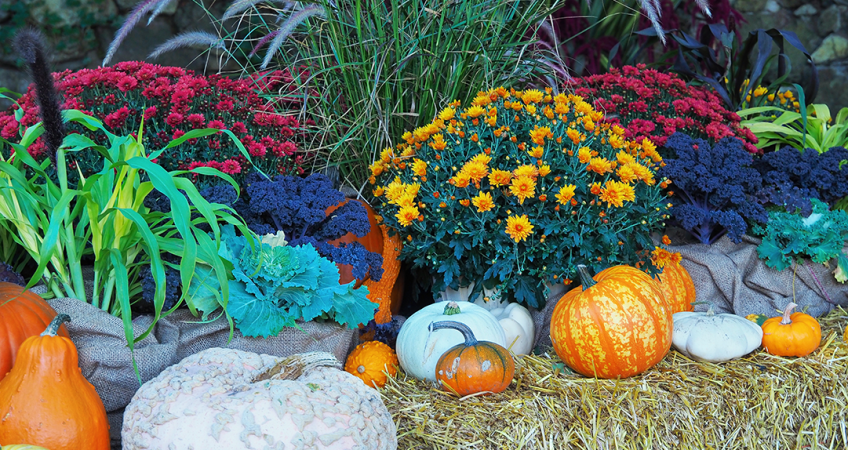 fall landscaping ideas to find that fall feeling fall landscaping ideas 2920