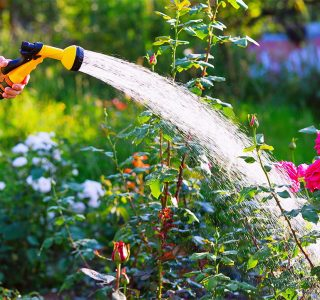 Hot Summer Watering Tips