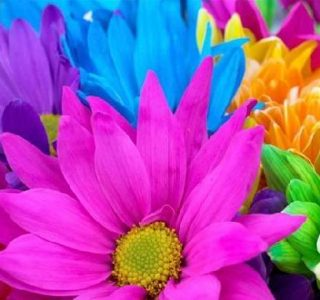 colorful flowers 10706