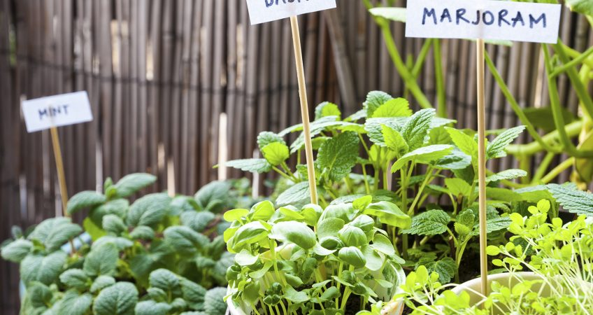 Start Your Own Herb Garden in NJ Hightech Landscapes